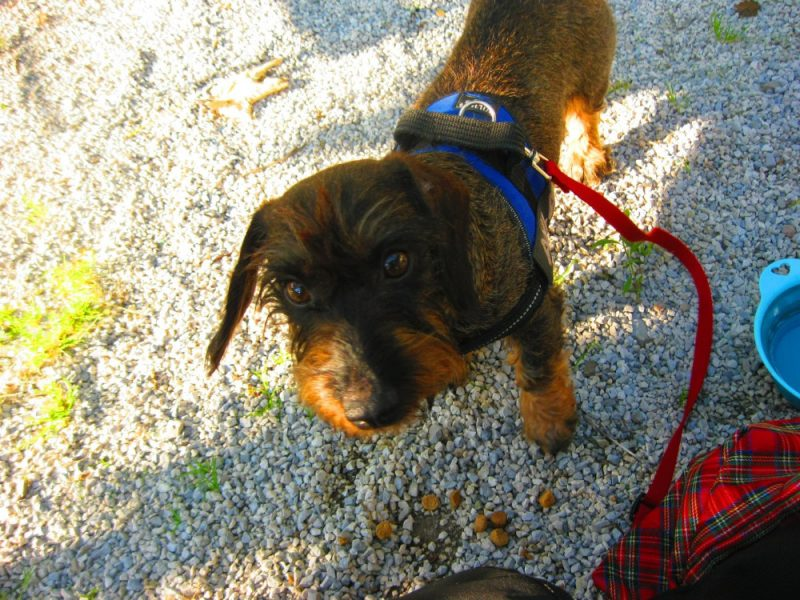 Met de hond in Salzburg