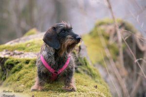 Hond bos zonnetje