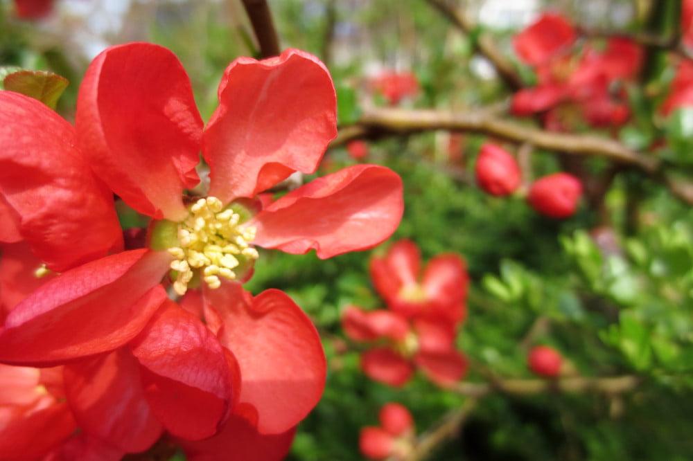 Bloemen in het voorjaar
