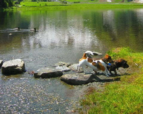 Honden op vakantie in Oostenrijk