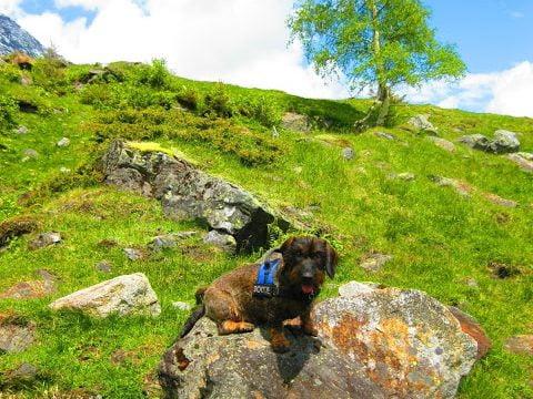 Hond zit op een rotsblok