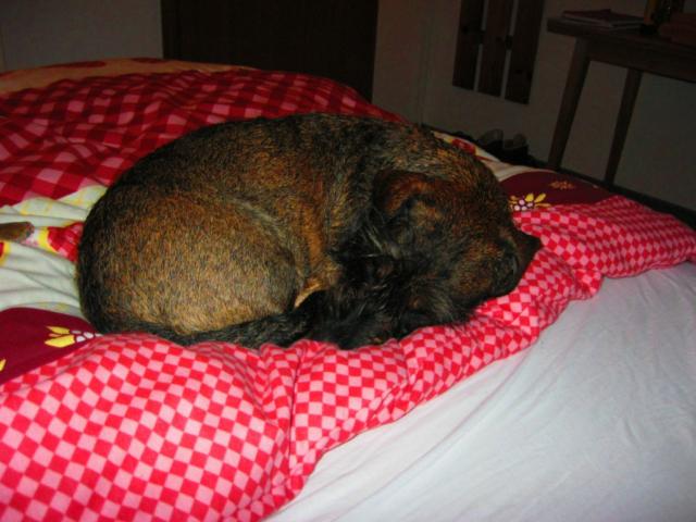 Hond ligt te slapen op vakantie