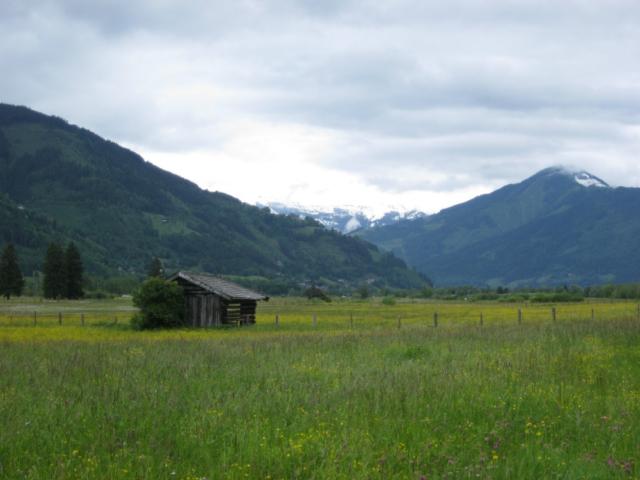 Bloeiende Alpenweiden in Oostenrijk
