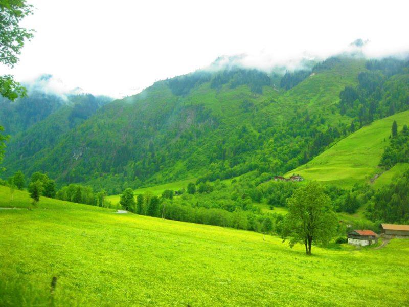 Alpenweiden in Oostenrijk