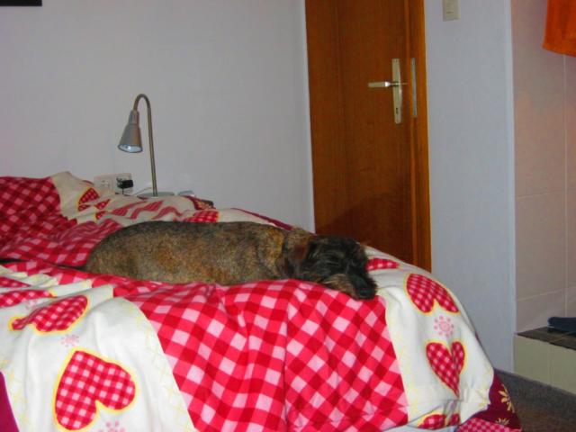 Hond slaapt in Oostenrijk