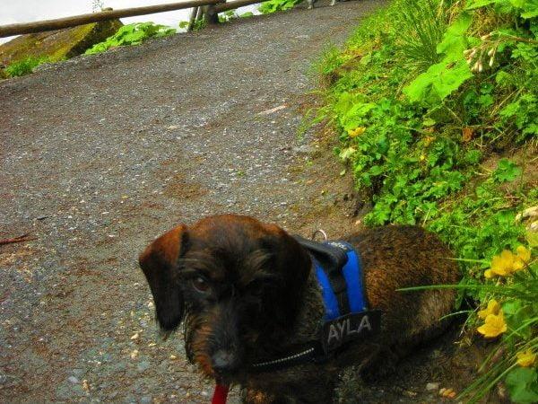 Hond bij de Krimmler waterval