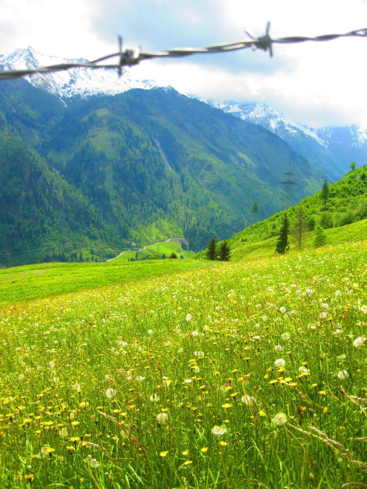Natuur in Oostenrijk
