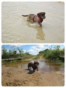 Hond doet pootje baden