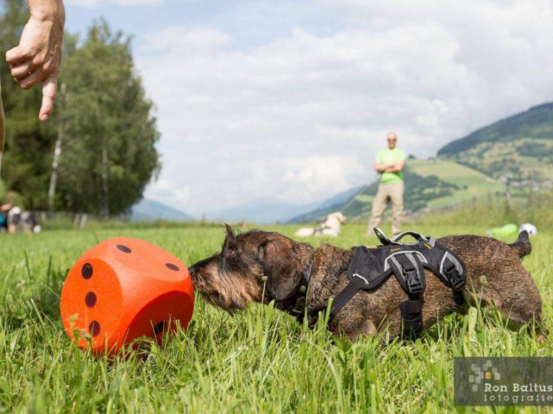 Hond doet aan snoetbal op vakantie