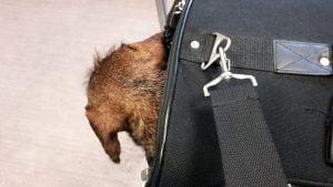 Hond in de bench in de trein