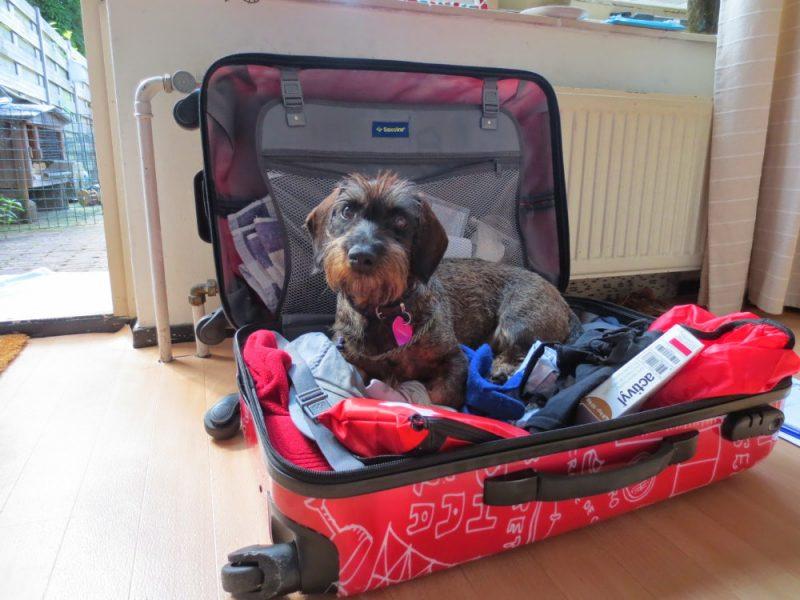 Hond zit in de koffer