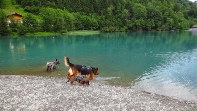 Met de honden bij de Klammsee