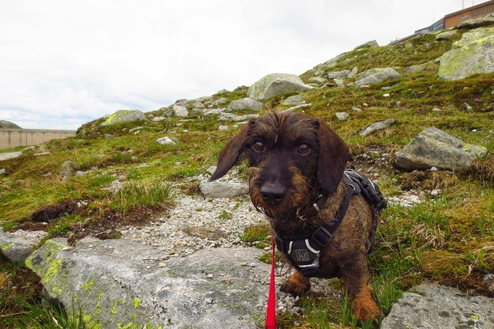 Wandelen met de hond in Oostenrijk