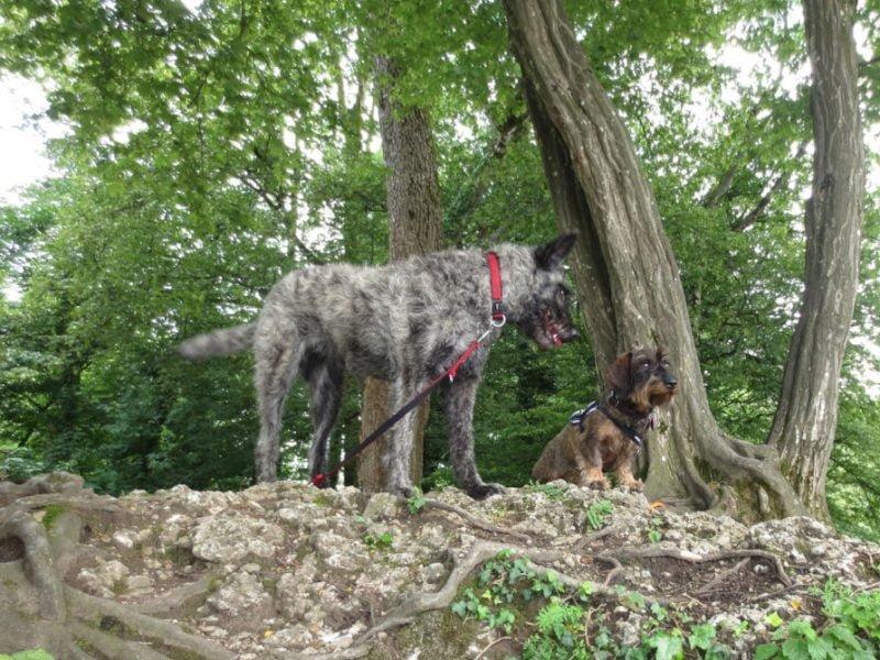Met de honden in Salzburg stad op vakantie