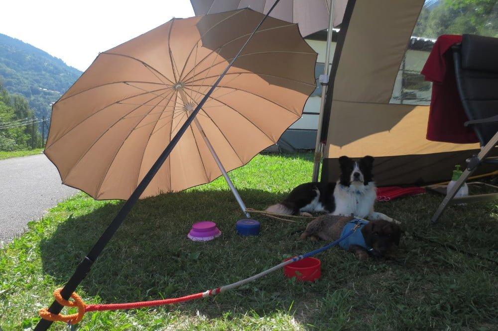 Honden in de schaduw op de camping in Montchavin