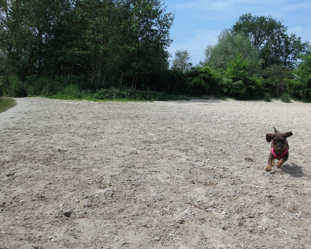 Hond bij het Erkemederhondenstrand