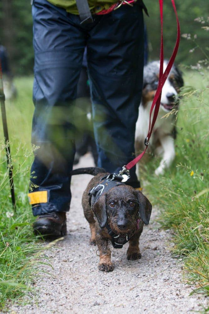 Met de hond wandelen in Oostenrijk