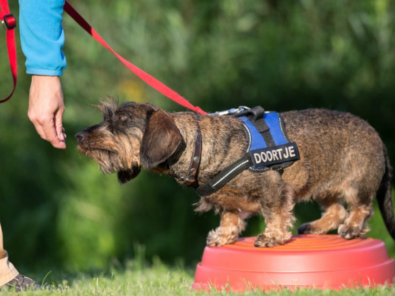 Hond doet balansoefening tijdens workshop