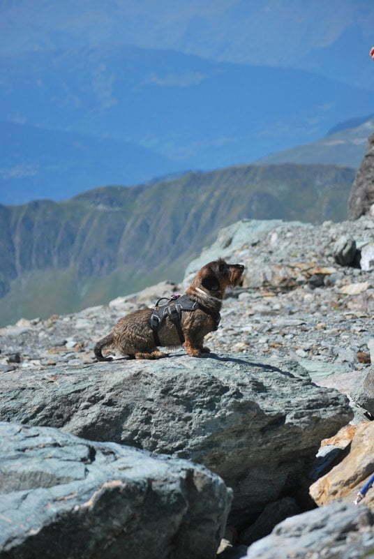 Hond zit op een rotsblok in de bergen
