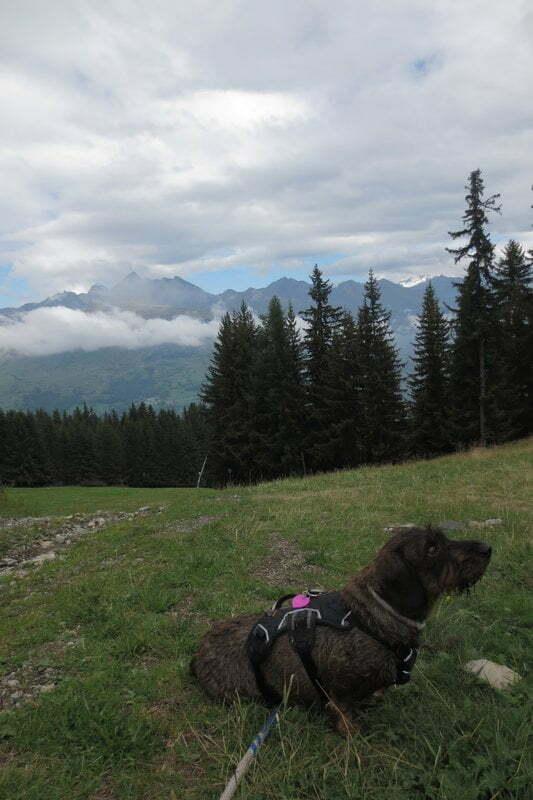 Hond wandelt in de bergen