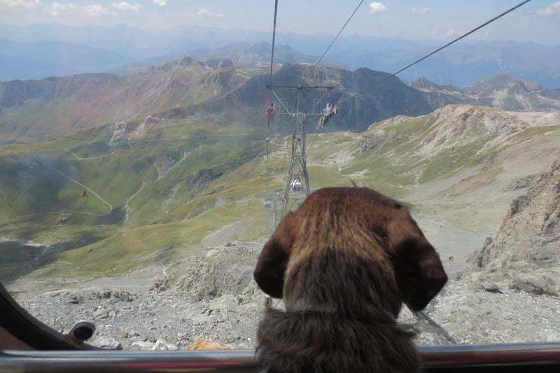 Hond in de gondel