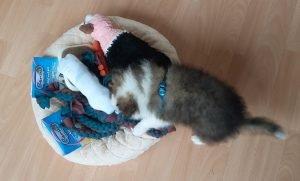 Filou bekijkt zijn puppypakket