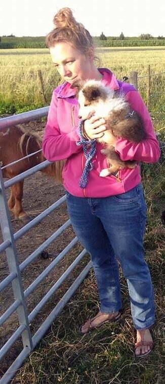 Pup maakt kennis met paardjes tijdens de puppyles
