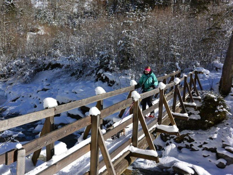 Sneeuwschoenwandelen met de hond