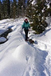 Sneeuwschoenwandelen met de hond in een sprookjesboek