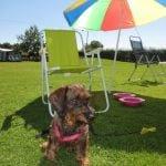 Hond op de camping