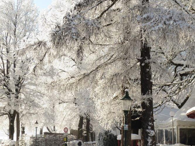Sneeuwwitte bomen bij Zell am See