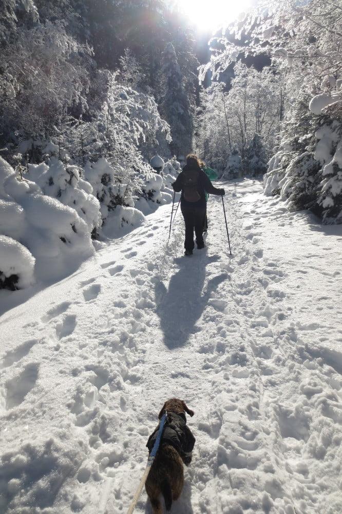 Wandelen met de hond bij de Krimmler waterval