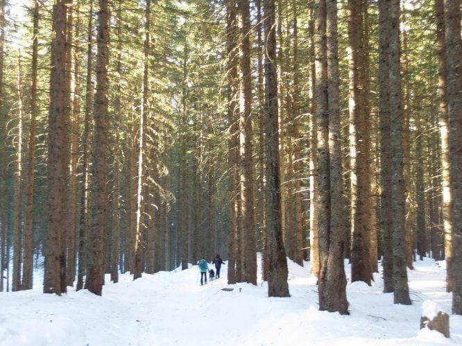 Oud woud Rauris