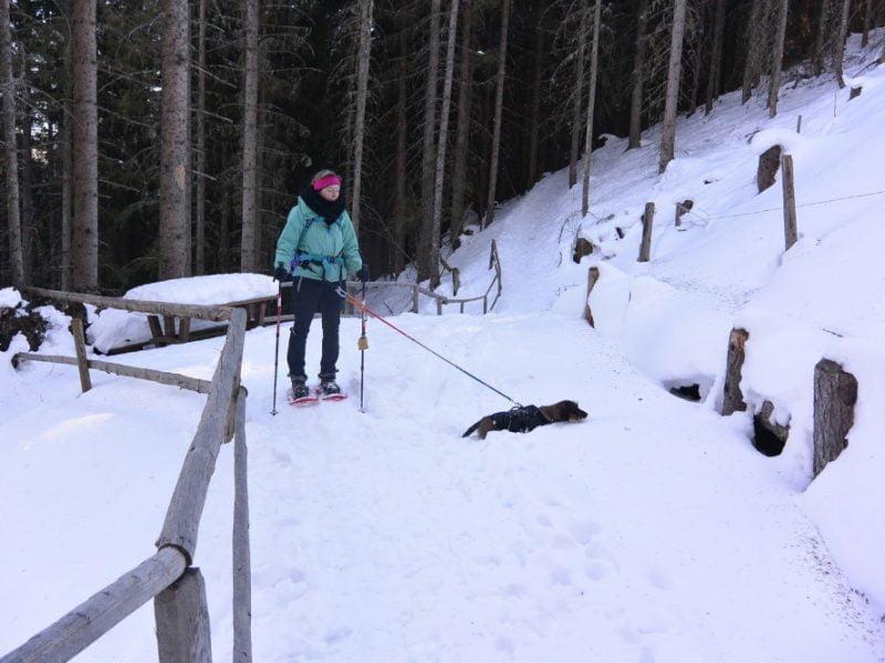 Sneeuwschoenwandelen met de teckel