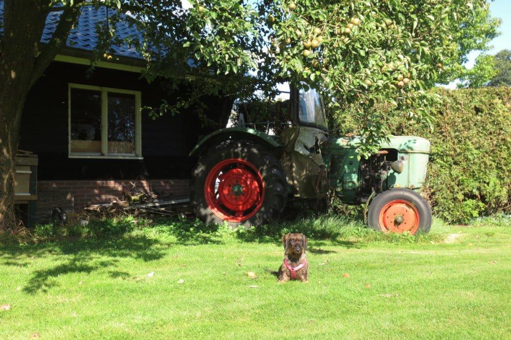 Kamperen bij de boer met de hond