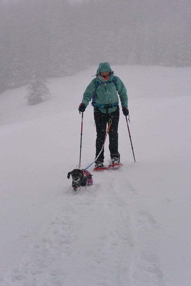 Met de hond wandelen in de diepe sneeuw in Oostenrijk