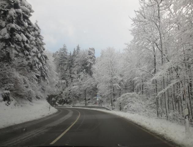Besneeuwde bomen in Oostenrijk onderweg naar huis