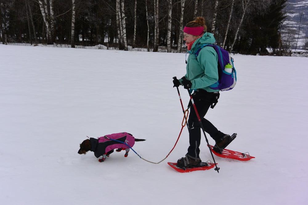 Met mijn teckel sneeuwschoenwandelen in Oostenrijk