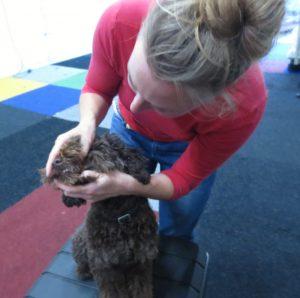 Gebit en tandvlees bekijken bij een hond