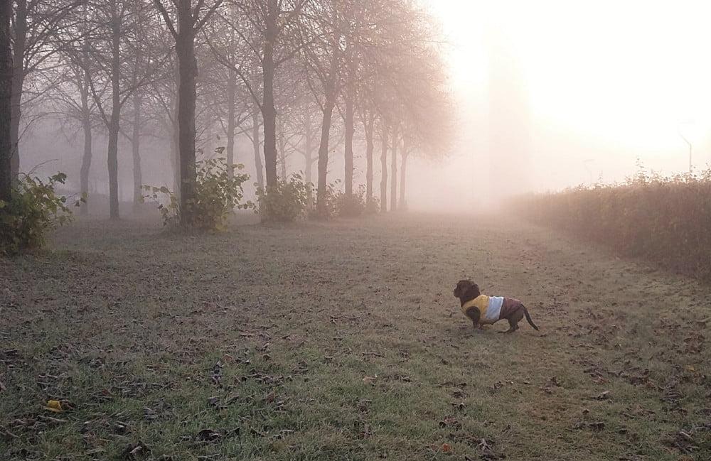 Hond met jasje in de herfst