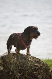 Hond op het Erkemederstrand