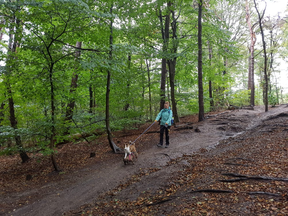 Met de honden wandelen in het bos