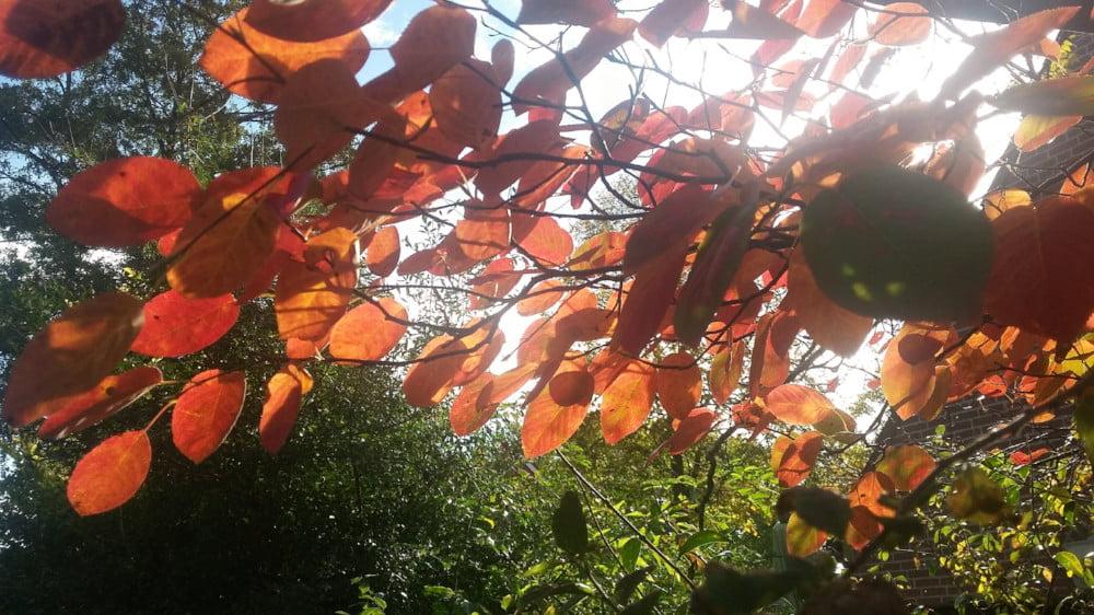 Mooie herfstkleuren tijdens het wandelen met de hond