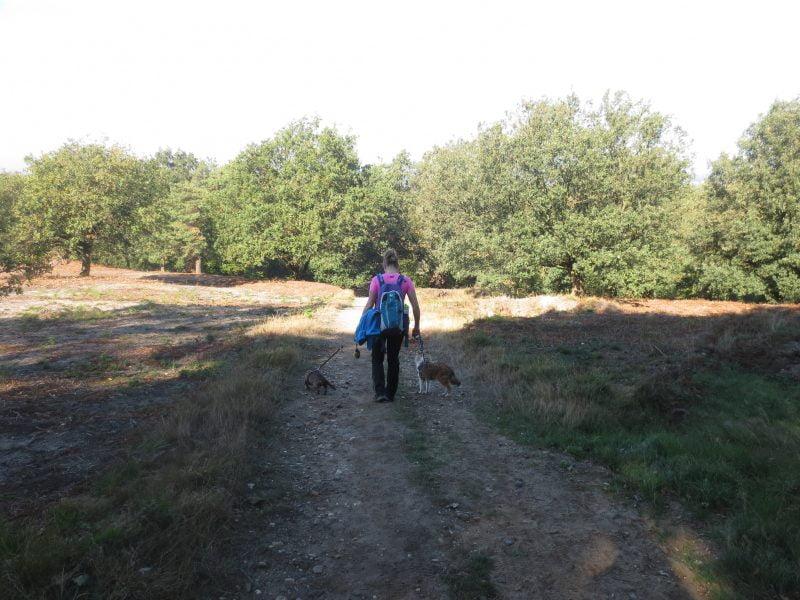De Hettenheuvelroute wandelen met de honden