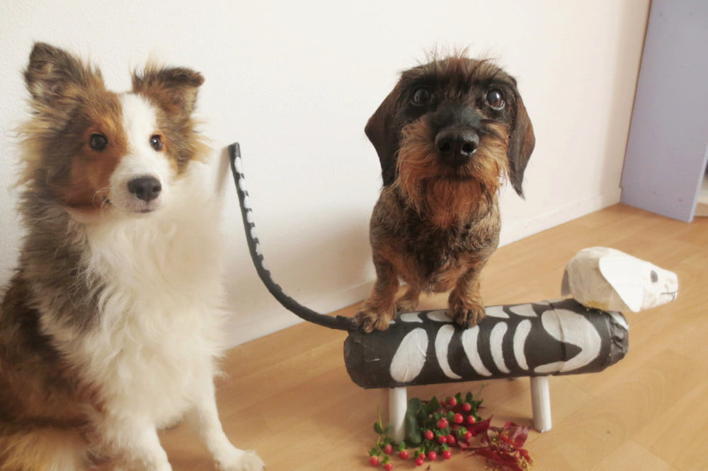 Sheltie en Teckel poseren met een skeletteckel voor Halloween