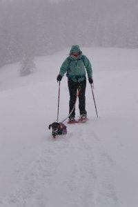 Teckel in de winter in de Oostenrijkse sneeuw aan het wandelen