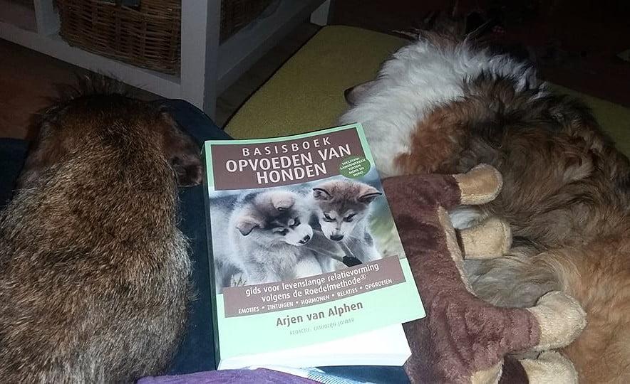 Basisboek opvoeden vanhonden