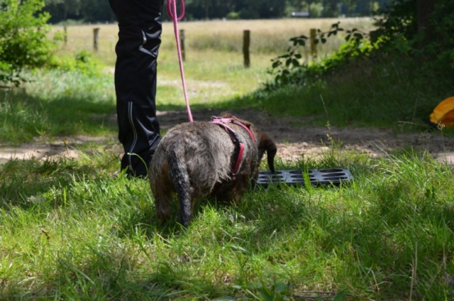 Hond zoekt een schat