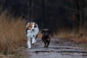 Honden rennen in het bos