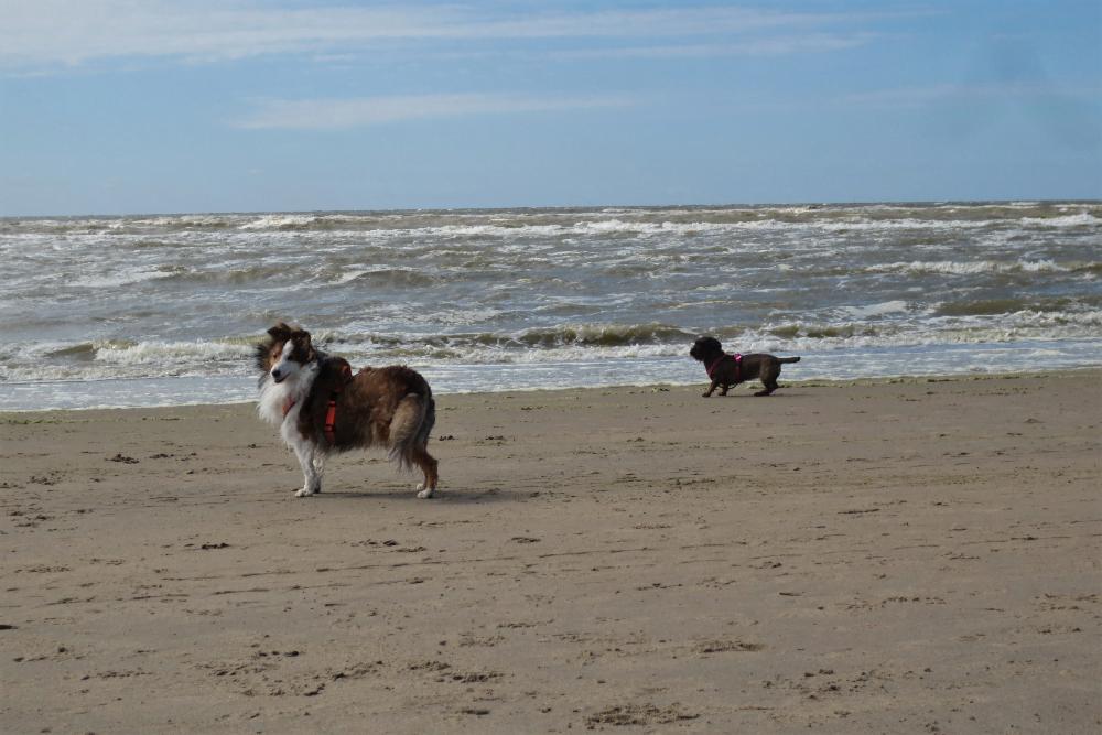 Strand hond